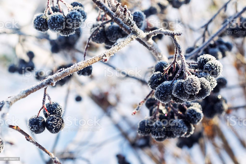 Berries in winter. With the effect of toning.