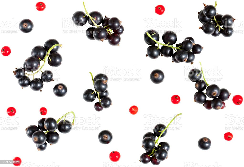 berries of black currant and red currant isolated on white background. stock photo