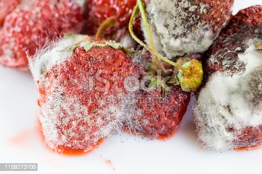 covered with rot and mold berries ripe strawberries, harvested spoiled harvest berries close-up