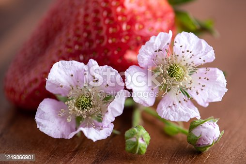 Berry fruit blossom with strawberry in the background on wooden serving plank, close-up.