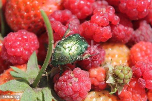 istock berry 813697368