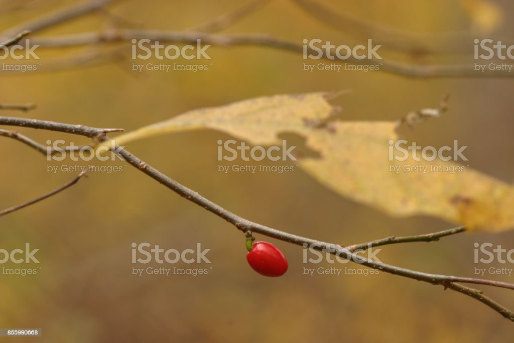 Berry stock photo