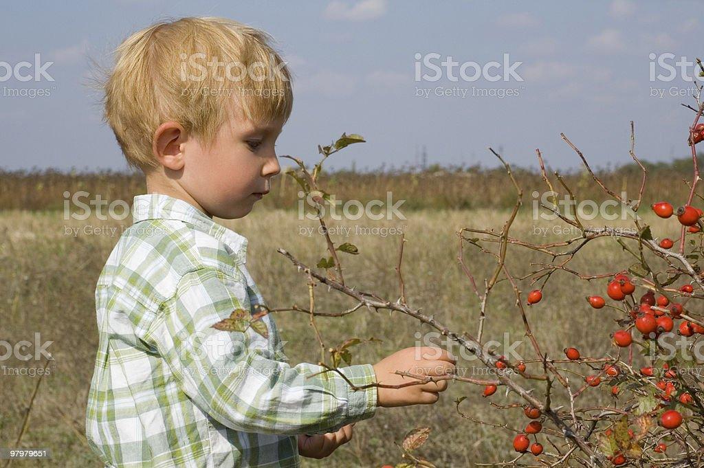 berry-picking stock photo
