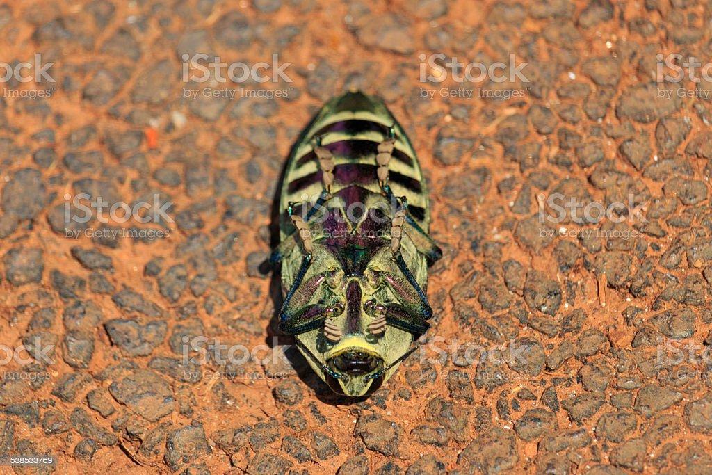 Besouro stock photo