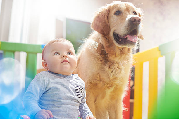 best buddies - playpen stock pictures, royalty-free photos & images