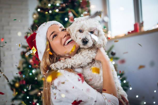 das beste weihnachtsgeschenk überhaupt - silvester mit hund stock-fotos und bilder