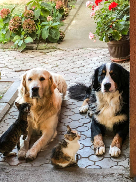 Best friends dogs and cats picture id1082531526?b=1&k=6&m=1082531526&s=612x612&w=0&h=c2cneimaroahwscuskancftc avhefyhgola9tuk418=