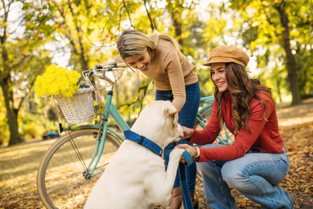 Best friends enjoying their time in park and walking with retriever picture id1217884307?b=1&k=6&m=1217884307&s=612x612&w=0&h=du3 hi8matl w51ecrxgisqxupysiq6cuwcf7c1c nq=