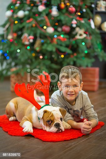 Best friends handsome blond boy and puppy red white english bulldog enjoying spending time with each other close to Christmas tree on red carpet mat. Dog wearing deer cornuted.