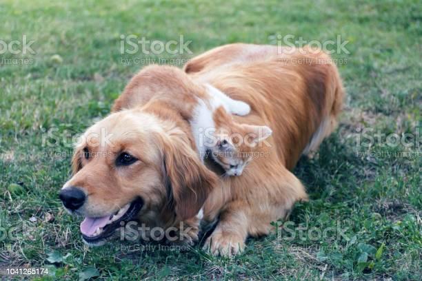 Best friends picture id1041265174?b=1&k=6&m=1041265174&s=612x612&h=ww9tn8knylaidh0iw9wg6rhkhwyris edbzr4fhaq28=