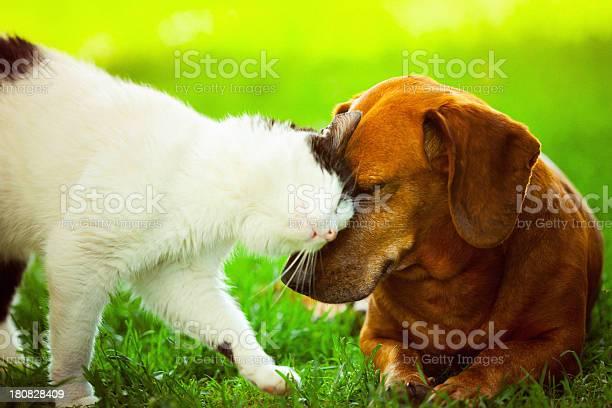 Best friends picture id180828409?b=1&k=6&m=180828409&s=612x612&h=egpyig1sg5i qhld9l5gsixfy5omjrgksh 4d0ikreg=