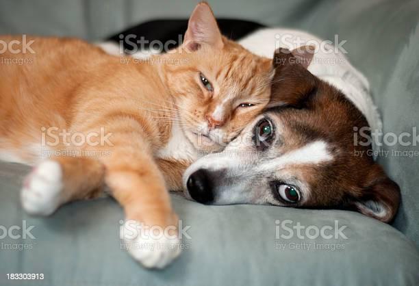 Best friends picture id183303913?b=1&k=6&m=183303913&s=612x612&h=pb0o6b8xtzhhpugzahkwidmy8dpgtxwo6an7kt0iwr4=