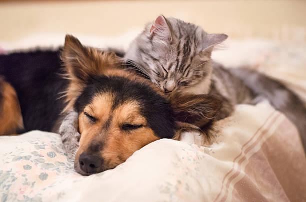 Best friends picture id473016906?b=1&k=6&m=473016906&s=612x612&w=0&h=ngxuljh0mnqvytg05 o ftm8rzfhejexmz7zapzcuii=