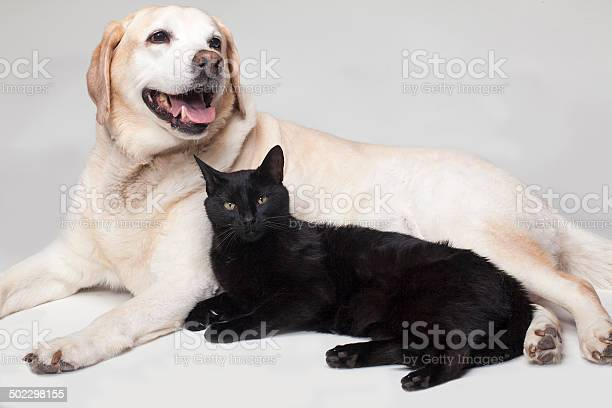 Best friends picture id502298155?b=1&k=6&m=502298155&s=612x612&h=yzo3cmp dh y8dcxqriakmfcpb7s 1xkjgfarsb51pu=