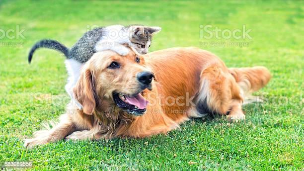 Best friends picture id583689556?b=1&k=6&m=583689556&s=612x612&h=y7x3z lnpa2nqxuzsqj ct2g3gsko5u  87kcn5cgna=