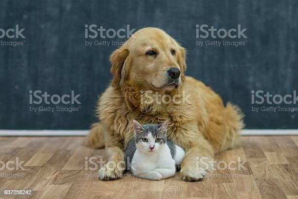 Best friends picture id637258242?b=1&k=6&m=637258242&s=612x612&h=ff7pnflu1r6nhkeaw9ezugozs5h5gpq hba8zbhc5ac=