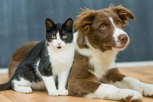 Best friends picture id640144714?b=1&k=6&m=640144714&s=612x612&w=0&h=sisnfae txbmdgmwuzohjhpxhfltiu4lktx zmvasac=