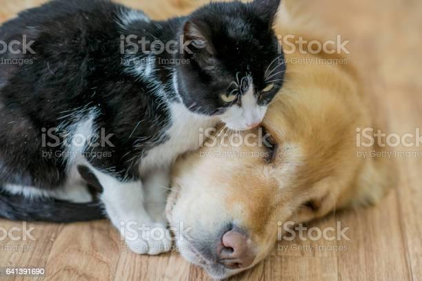 Best friends picture id641391690?b=1&k=6&m=641391690&s=612x612&h=wugvgicoaqbtnm7jcgzspi93dmoxyo u5y7laxzwu6u=