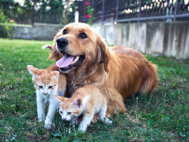 Best friends picture id813291300?b=1&k=6&m=813291300&s=612x612&w=0&h=q33nob p2gyhm93dqueln1 ot8nazuwcypsefhtovlq=