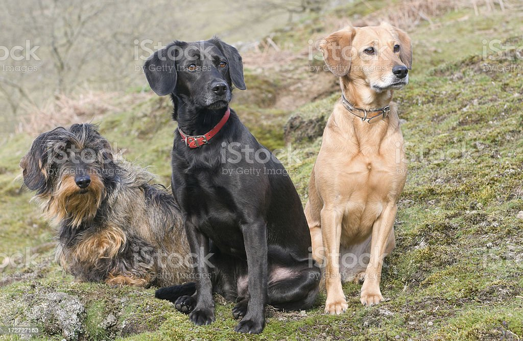 best of friends royalty-free stock photo