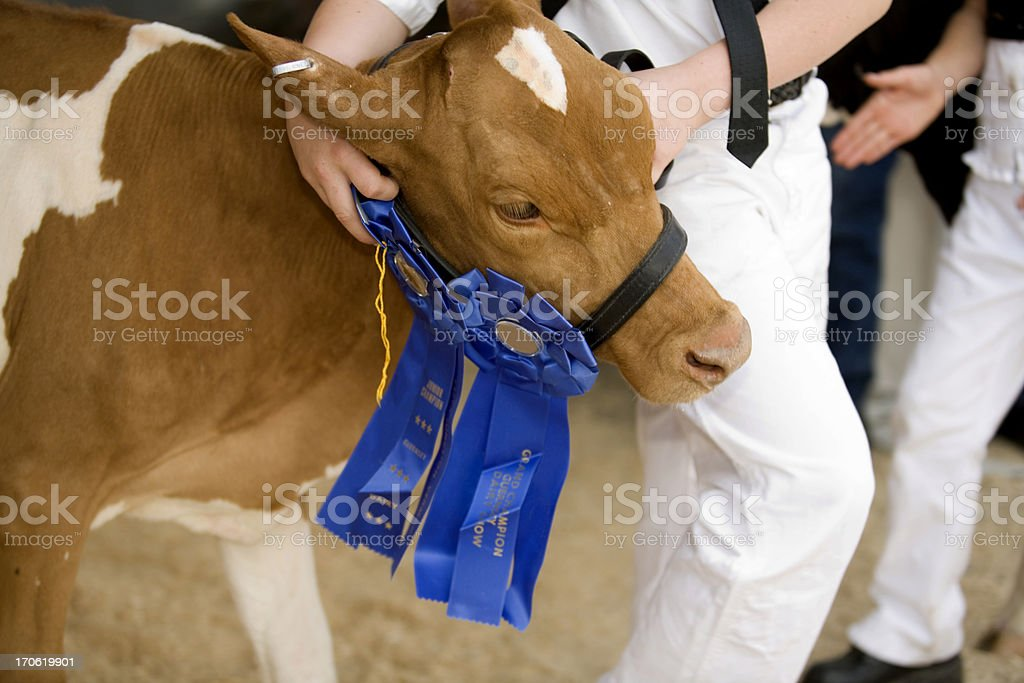 Best of Show royalty-free stock photo