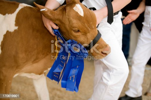 A blue ribbon champion for a 4-H boy at the county fair.Click an image to go to the People Gallery.