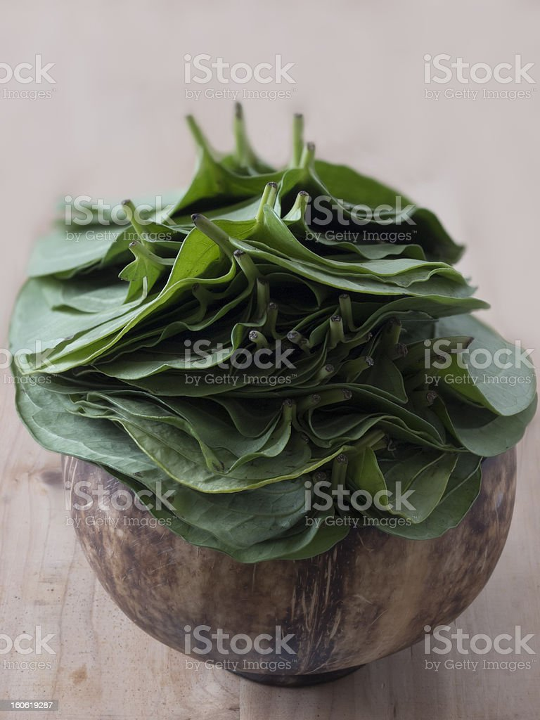 betel leaves royalty-free stock photo