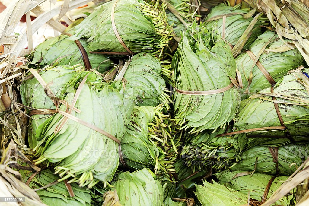 Betel Nut leaves royalty-free stock photo