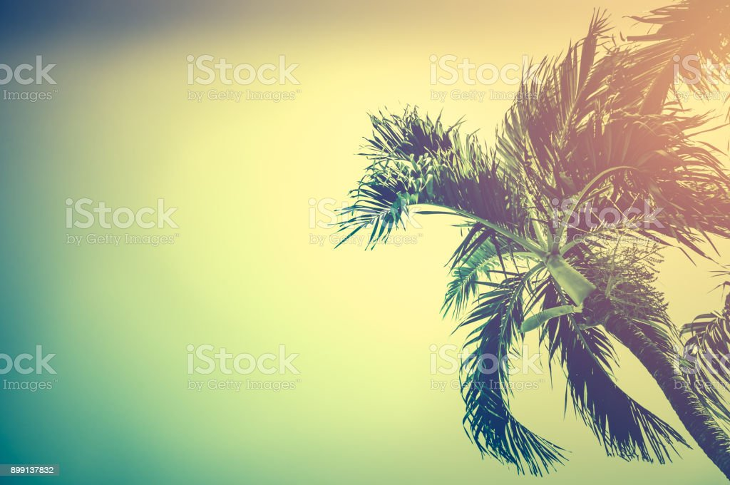 Betel palm tree under sky in the evening with copy space. Vintage tone. stock photo