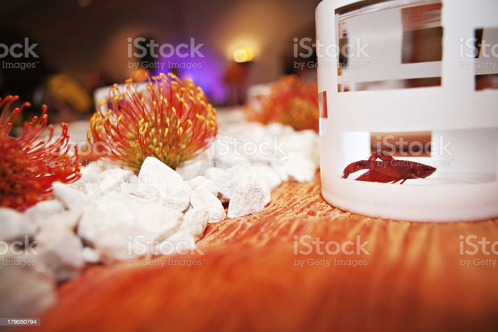 Betta Fish on Tabletop royalty-free stock photo