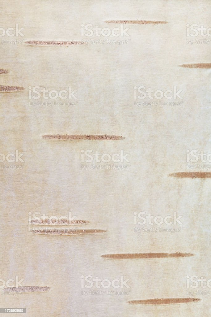 Betula background stock photo