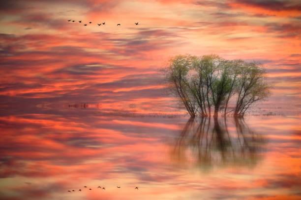 Entre rêve et réalité - Photo
