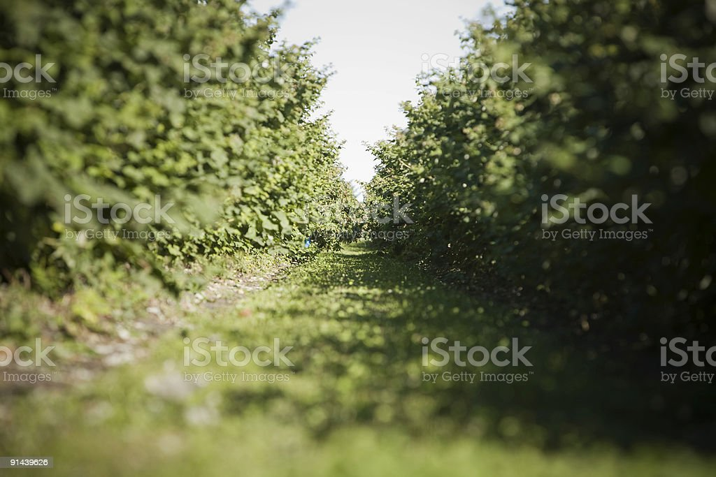Between the rows royalty-free stock photo