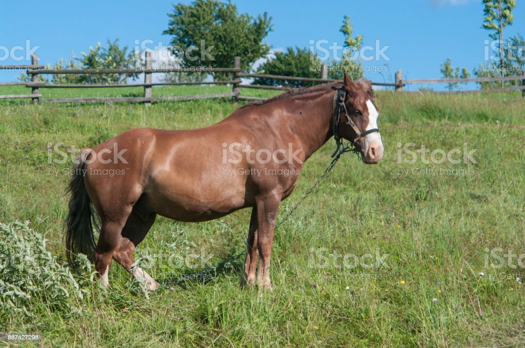 Beutiful horse is grazing off the grass in a village stock photo