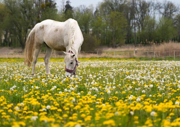 Beutiful horse on the farm picture id1224668569?b=1&k=6&m=1224668569&s=612x612&w=0&h=n 4t1gslwjmrtl7vmmpipugcsf mrlm7vbi1k25psow=