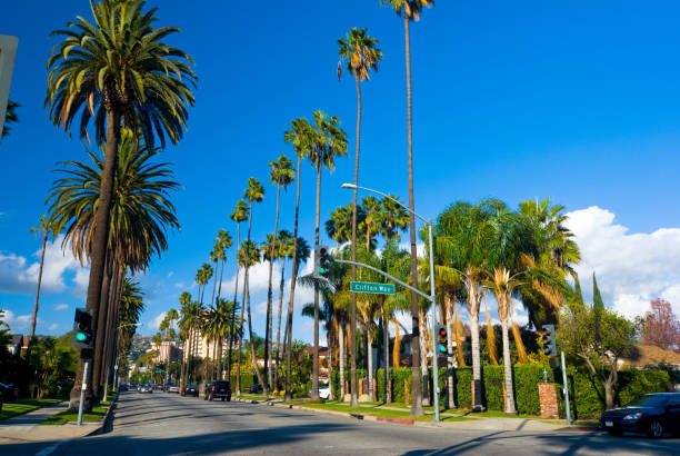 Beverly Hills Neighborhood palm tree lined street stock photo