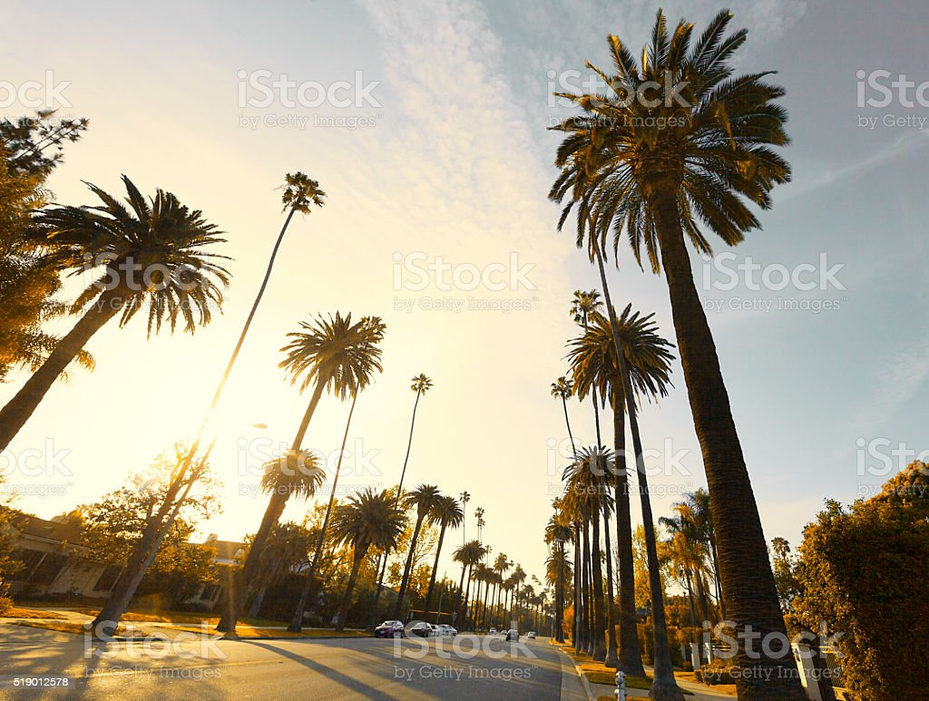 Beverly Hills Street with palm trees stock photo