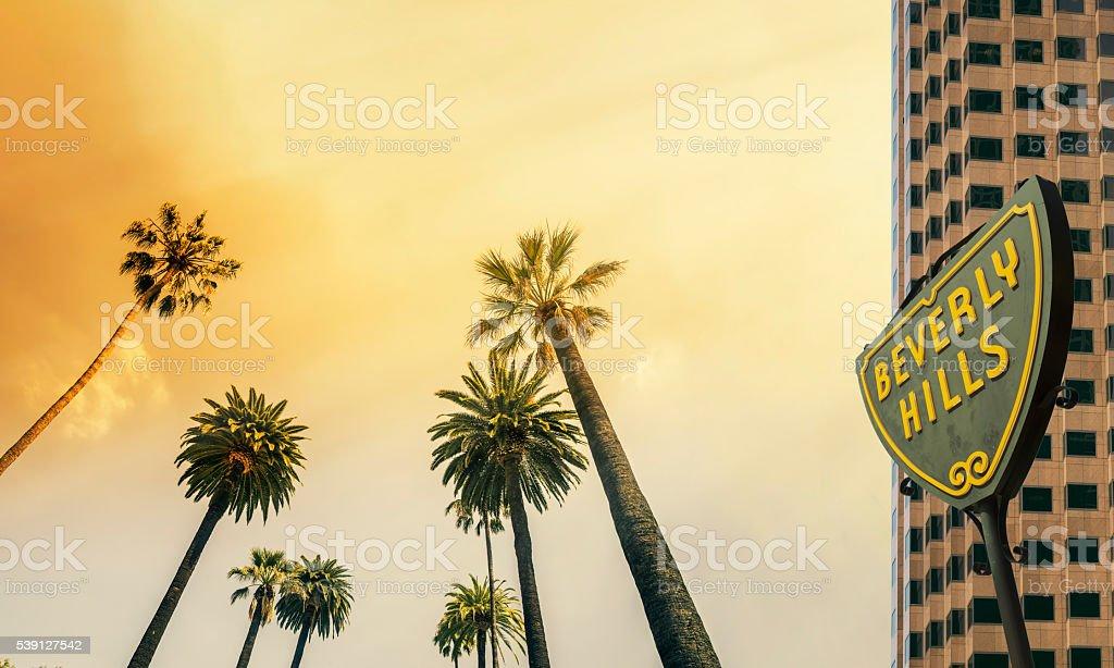 Beverly Hills,West Coast Palm Tree Sunshine stock photo