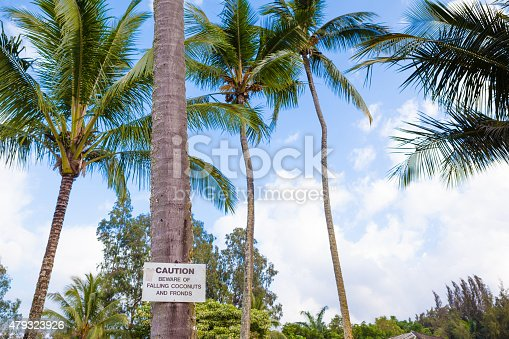 628409126istockphoto Beware of falling coconuts sign 479323926