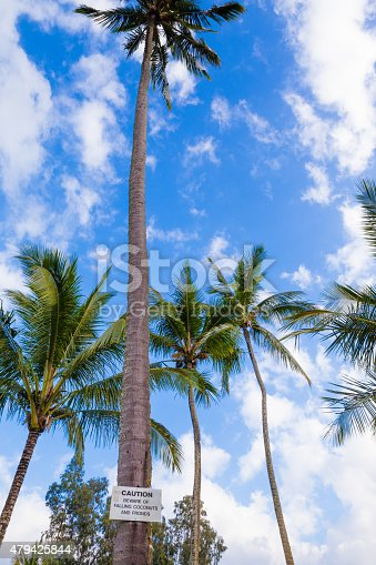 628409126istockphoto Beware of falling coconuts sign 479425844