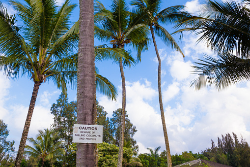 628409126 istock photo Beware of falling coconuts sign 479664908