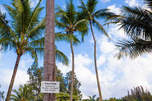 628409126 istock photo Beware of falling coconuts sign 483767266