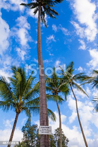 628409126istockphoto Beware of falling coconuts sign 487003336