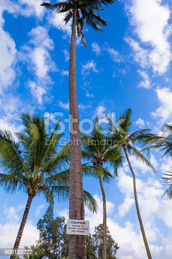 628409126istockphoto Beware of falling coconuts sign 506133222