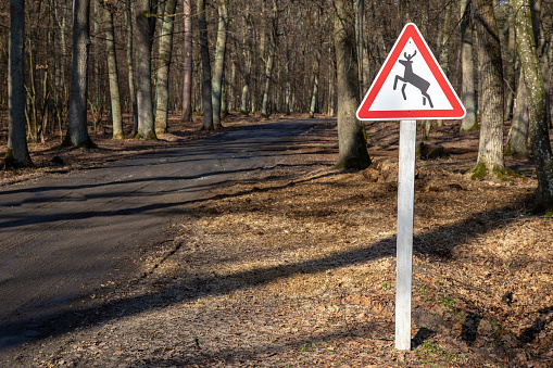 istock Beware of the deer sign at the road through the woods. 1184444487