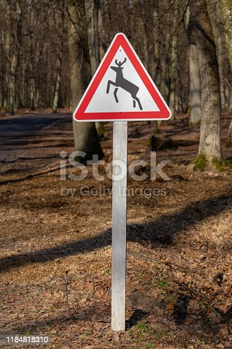 istock Beware of the deer sign at the road through the woods. 1184818310
