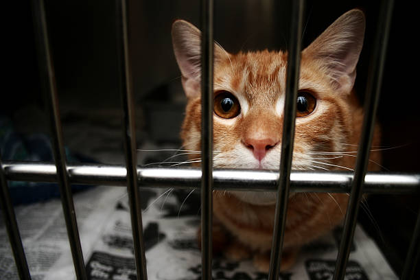 Bewildered Cat stock photo