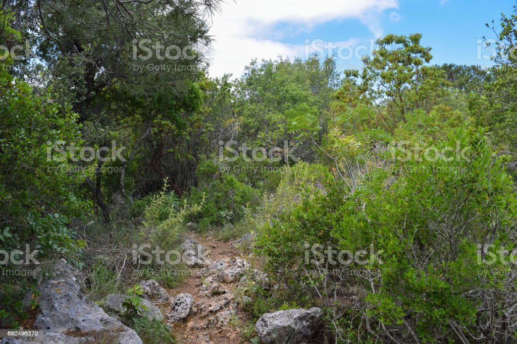 Beydaglari Coastal National Park (Sahil Milli Parki - Olympos Park). Wild nature of Mediterranean coastal region of Turkey foto de stock libre de derechos