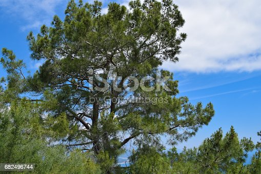 Beydaglari Coastal National Park Wild Nature Of Mediterranean Coastal Region Of Turkey - Fotografie stock e altre immagini di Albero