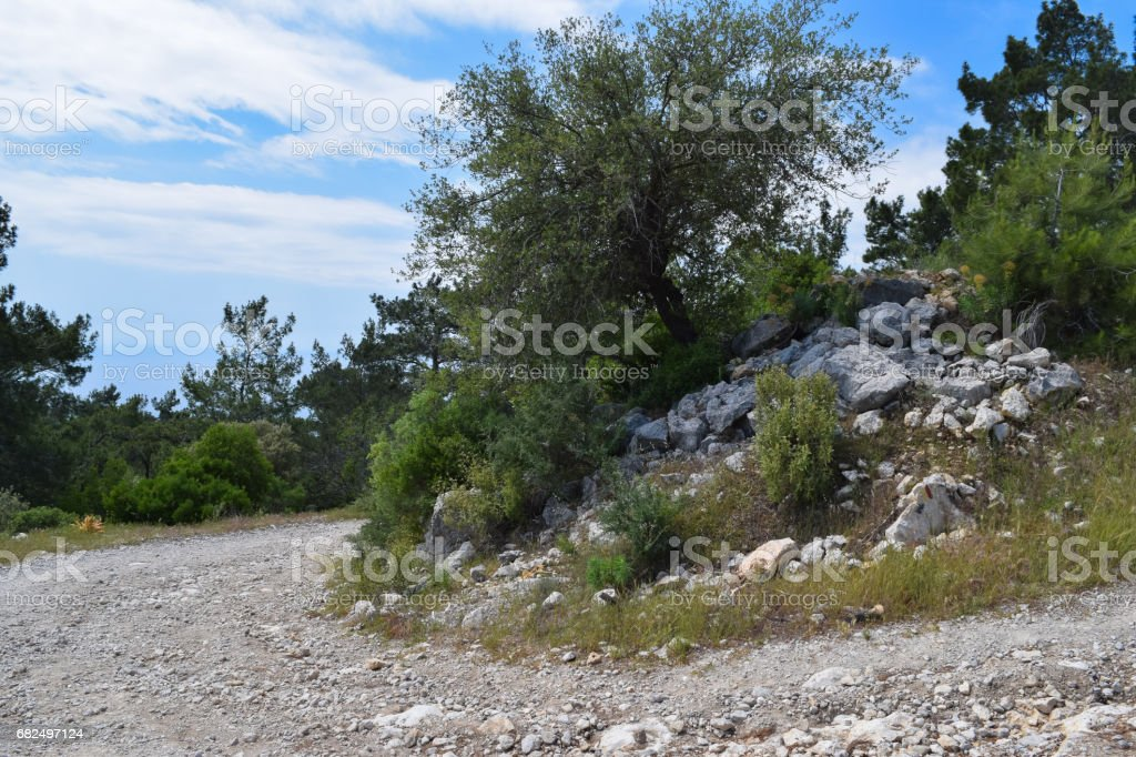 Beydaglari Coastal National Park (Sahil Milli Parki - Olympos Park). Wild nature of Mediterranean coastal region of Turkey royalty-free stock photo